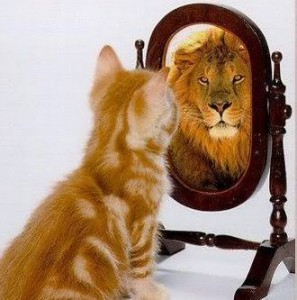 confidence cat & lion